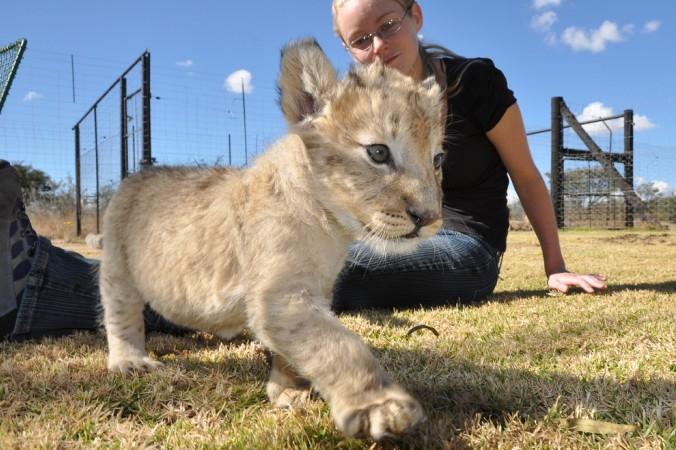 Du bist tierlieb und Dir liegt der Tierschutz am Herzern? Dann such Dir einen der Entwicklungshilfe Jobs mit echtem Wildlife-Feeling. Zahlreiche Projekte suchen nach Freiwilligen. (#4)