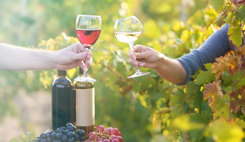 Der schönste Ort für eine gemütliche Weinprobe. (#1)