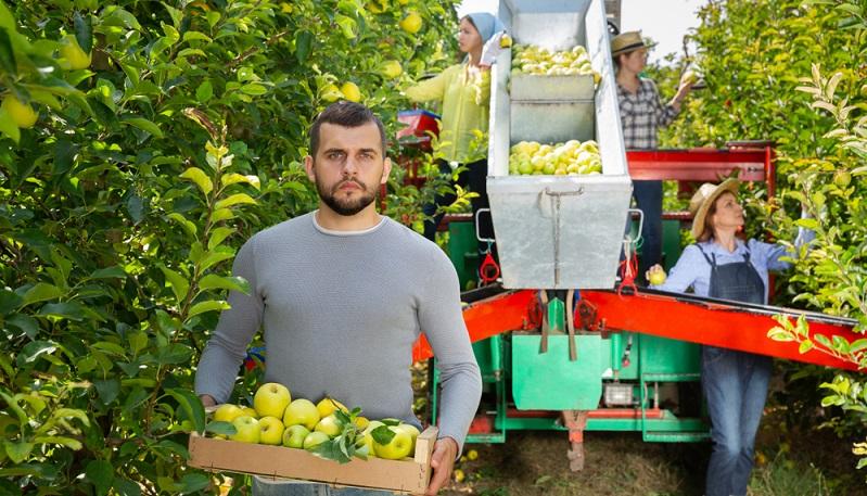 Erntehelfer Saisonjobs in der Ernte sind vor allem interessant für Arbeitnehmer, die körperlich sehr fit sind.(Fotolizenz-shutterstock:_Iakov Filimonov )
